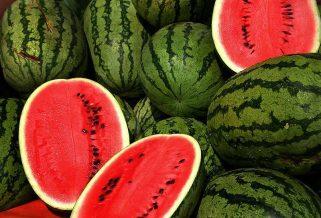 Во овие македонски градови, лубеницата држи највисока цена